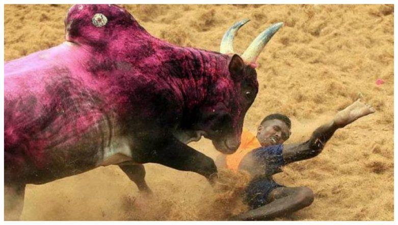 Jallikattu 2019: Two Men Watching Bull-Taming Event Killed in Tamil Nadu's Puddukottai