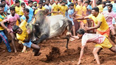 Jallikattu: Coimbatore Holds Its First Bull-Taming Sport Today, Draws Participation of 800 Bulls From All Over Tamil Nadu