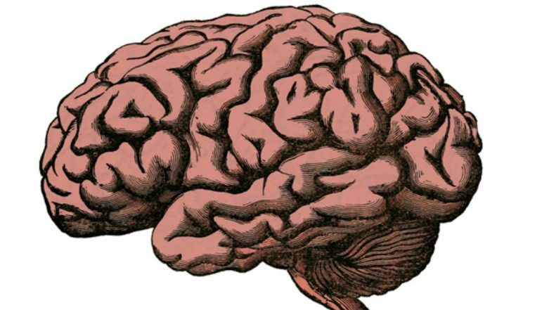 Epilepsy is Associated with Differences in Brain Volume and Thickness: Study