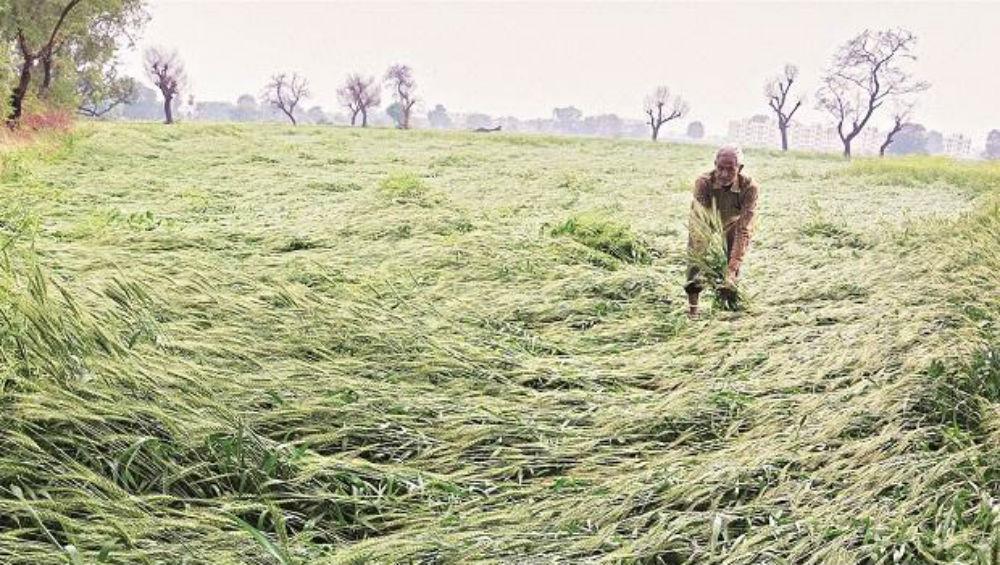 Coronavirus Lockdown Derails Farm-to-Fork Supply Chain Process, Haryana Farmers Fear Losses if Harvest Not Procured at Earliest