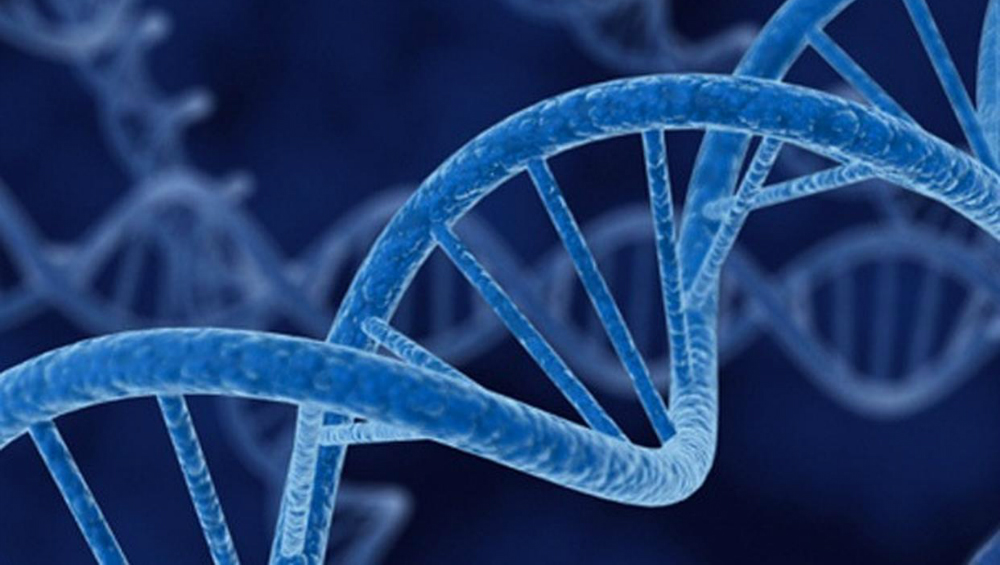 Researchers Identify Genes Linked to Heart Failure