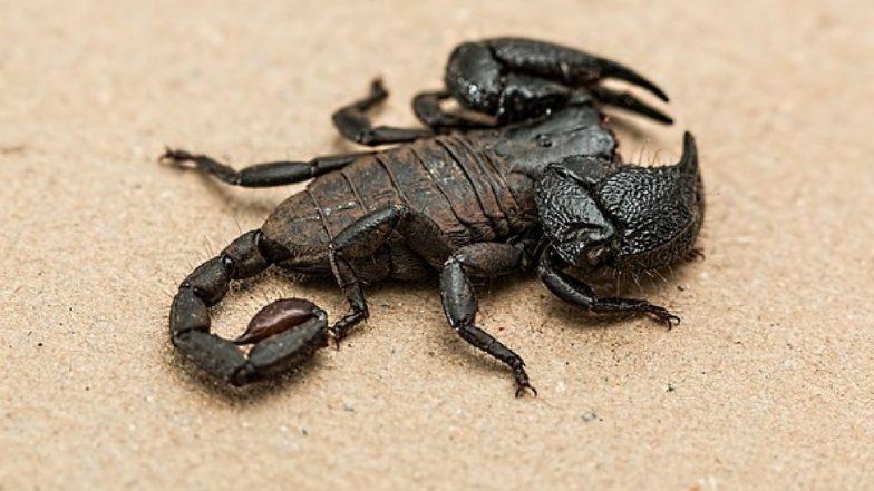 Scorpion Venom to Treat Arthritis? You Won't Believe These Crazy Medical Uses of Animal Venom