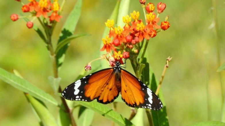 Kanpur Gets Its First Butterfly Park 50 Species Of Colorful