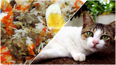 Cat Meat Served as Mutton Biryani in Chennai! Case of Missing Cats Stump Animal Lovers