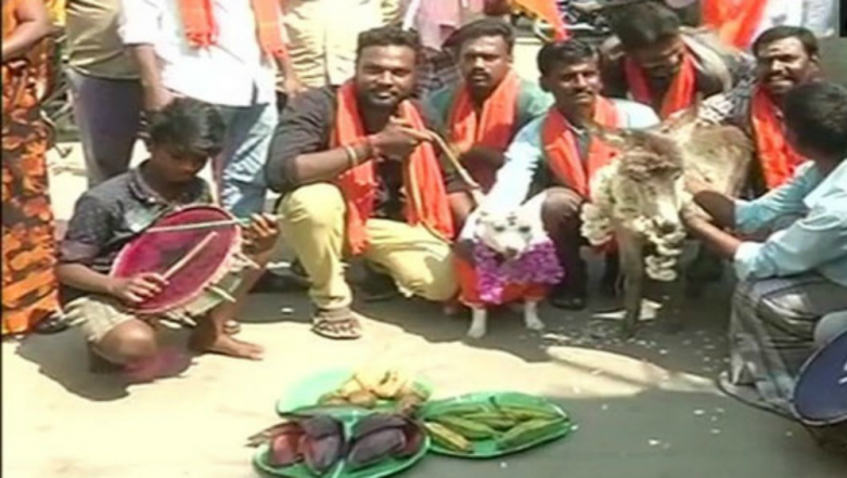 Dog, Donkey Married Amid Anti-Valentine's Day Protest In Chennai