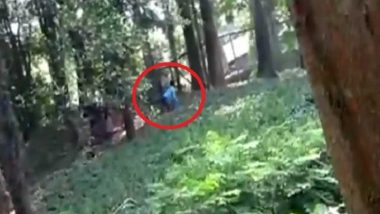 Man Jumps Into Lion's Enclosure in Kerala Zoo, Pulled Out Unhurt (Watch Video)