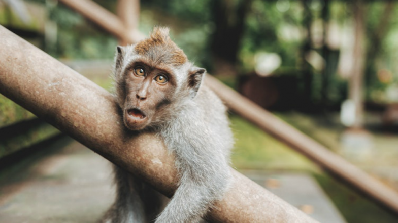 Madhya Pradesh: Searing Heat and Water Scarcity Kills Monkeys in Damoh
