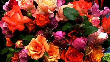 Rose Day Significance: Importance of Each Color of Rose for First Day of Valentine's Week