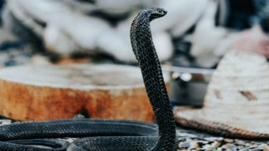 Snake Breaks Into Chamber Floor Chasing Nigerian Lawmakers Out of State Parliament