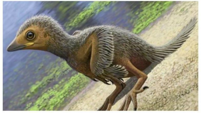 Ancient Baby Bird Fossil Offers Avian Evolution Clues
