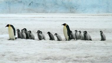 1.5 Million Penguins 'Supercolony' Earlier Detected From Space, Discovered on Antarctica's Danger Islands