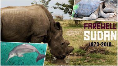Sudan, World's Last Male Northern White Rhino Dead: 7 Animals That Went Extinct in Last Two Decades Courtesy Us!