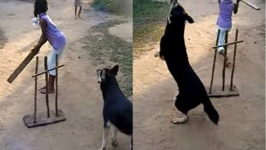 Only Humans Love Cricket? Here Are 6 Videos That Prove Dogs Are Pro at it Too!