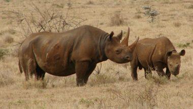 21 Rhinos Die in Nepal's Chitwan National Park in Six Months