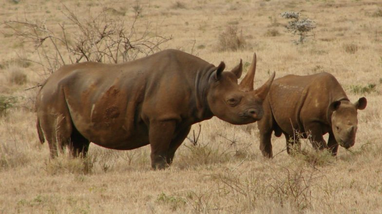 21 Rhinos Die in Nepal's Chitwan National Park in Six Months