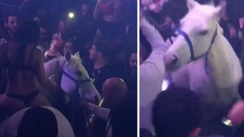 Nightclub shut down by police for walking a horse onto dancefloor