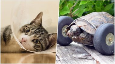 Baltimore Professor Spends Rs. 12.34 Lakh To Save Her Cat; Few Examples Where Humans Have Shown Kindness Toward Animals