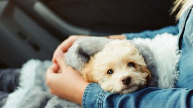 Your Decision to Own a Dog is Influenced by Your Genetic Makeup