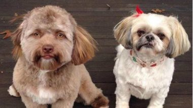 This Dog's Pic Confuses Twitterati; Netizens Cannot Decide Which Celebrity It Resembles