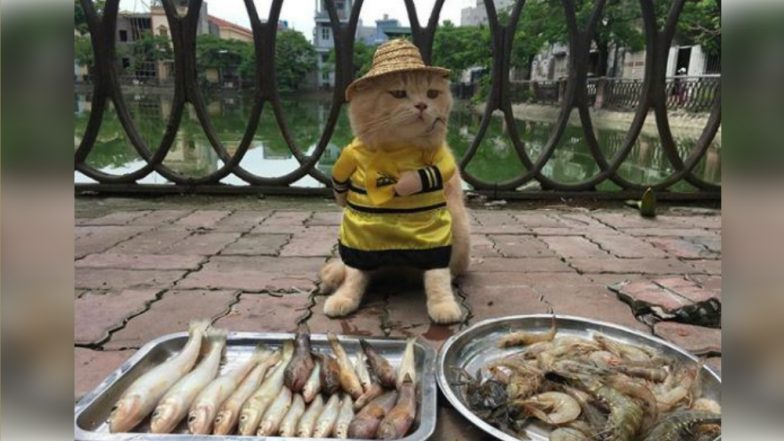 An Adorable Cat Named Dog is Selling Fish in Vietnam, See Cute Pictures of the Feline Seller