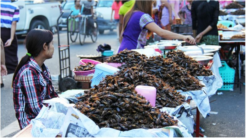 China is Breeding Billions of 'Super Cockroaches' Using AI Software to Produce Medicine, Experts Fear a Catastrophe