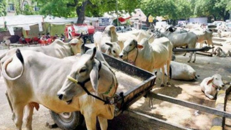 Cows Forced to Eat Plastic in Delhi, Says NGT, Orders Inspection of Dairy Farms