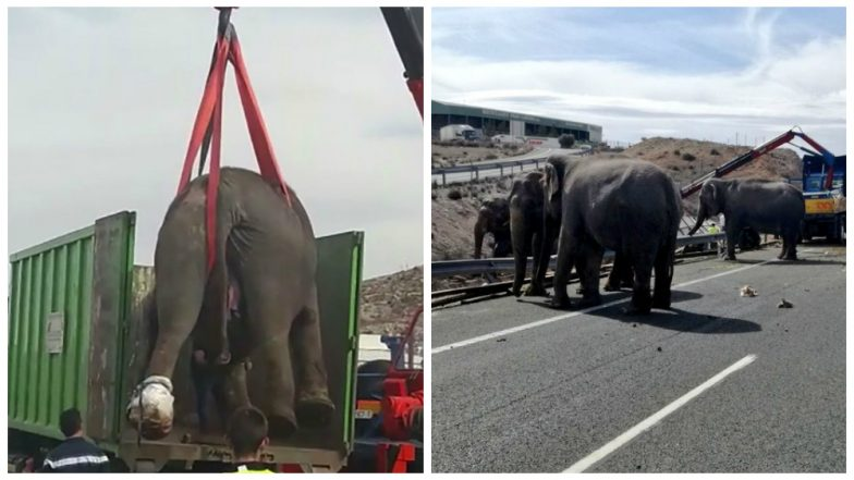 Elephant dies after circus truck overturns on Spanish road