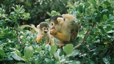 Squirrel Monkeys at New Zealand's Wellington Zoo Fight Thieves Who Tried to Steal Them