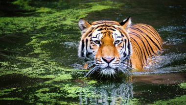 Sarthana Zoo in Surat Makes Arrangements of Coolers and Water Showers  to Keep Animals Cool This Summer