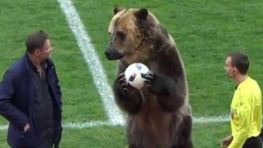 Grizzly Bear Hands Match Ball To Referee During Russian Football League Game, Fans not Amused; Video Inside