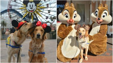 Training Service Dogs Took a Trip to Disneyland and the Pictures are the Cutest Thing You'll see Today