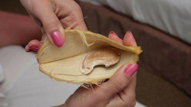 Amazing Health Benefits of the Mango Kernal or 'Gutli'