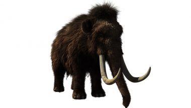 Woolly Mammoths to Make a Comeback? Scientists to Clone Giant Relatives of Elephants in Lab