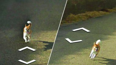 Dog Followed Google Street View Car in Japan and Ruined Every Photo on Google Maps