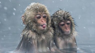 Take Bath to Reduce Stress, Just Like These Snow Monkeys from Japan Do!