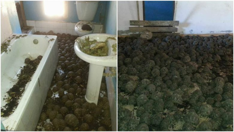 10,000 Stolen Endangered Tortoises Found in Madagascar House, Officials Speculate Poaching and Pet Trade
