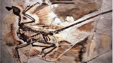 World's Oldest Dandruff Discovered on 125-Million-Year-Old Microraptor Dinosaur by Scientists