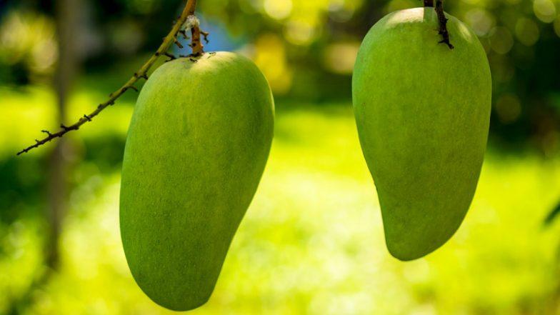 Mango Production Damaged in Uttar Pradesh Due to Severe Weather