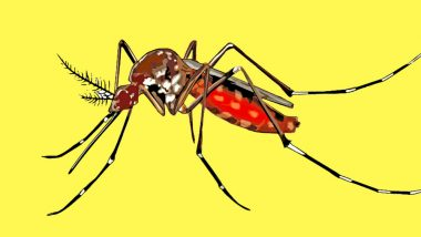 Dengue Could Risk 6 Billion Lives by 2080 Says Study: How to Prevent Mosquito Bites this Monsoon