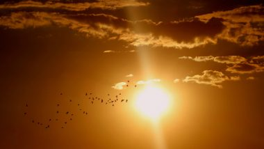 Vitamin D Therapy Helps Diabetes and Cancer Patients, Says Study