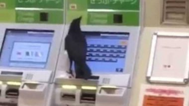 Crow Uses Credit Card at Japan Train Station, Video Goes Viral