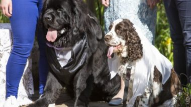 Royal Wedding But of the Dogs! Pair Named After Prince Harry and Meghan Markle Have Their Own Grand Ceremony in Scotland