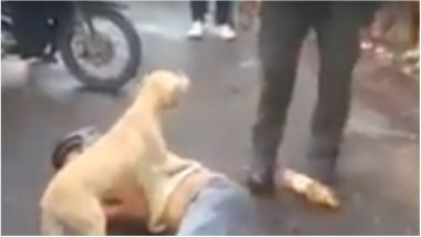 Dog is a Man's Best Friend: Video of a Loyal Dog Protecting His Drunk Owner Will Melt Your Hearts