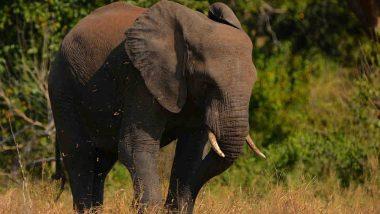 Elephant Dies After Being Hit by Bus in Karnataka