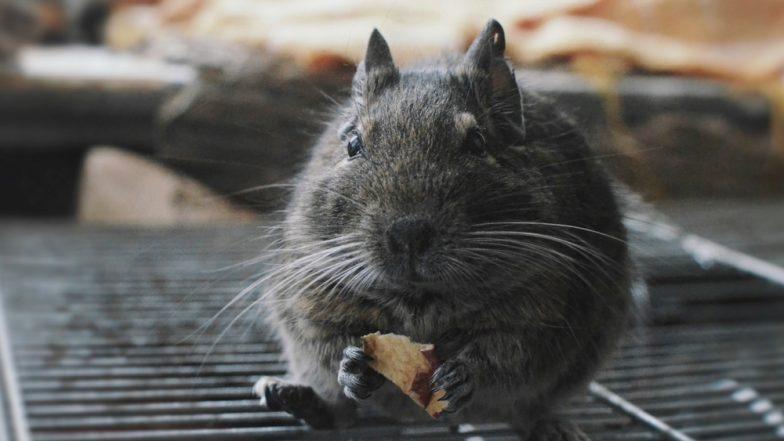 Comatose patient bitten in the eye by rat dies