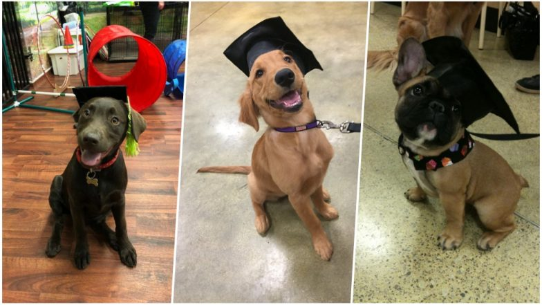 Puppy School Graduates; Twitterati is Delighted to Share the Pics as Pets Proudly Wear Graduation Caps!