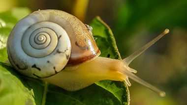Scientists Successfully Transfer Memory From One Snail to Another