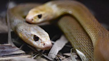 Uttar Pradesh Shocker: 40 Baby Snakes Emerge From AC in Farmer's House in Meerut District