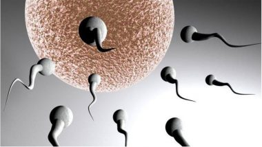 Scientists Create Embryo Without Sperm or Egg, Built in a Mouse Womb in the Lab