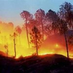 Turkey Forest Fire: 8 Killed, 864 Injured After Wildfire Sweep Manavgat